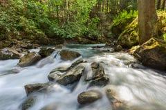 小河在山森林里 库存照片
