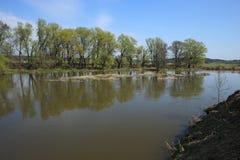 小河在早期的春天 免版税库存照片