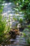 小河在春天森林里 免版税图库摄影