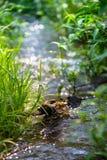 小河在春天森林里 库存照片