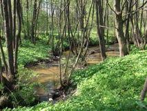 小河在春天森林 免版税库存照片