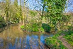 小河在春天流经一个草甸 图库摄影