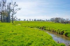 小河在春天流经一个草甸 免版税库存图片
