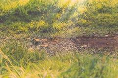 小河在有阳光的森林 免版税库存照片