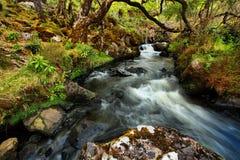 小河在树下在Lillernay国家公园 库存图片