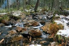 小河在森林里在晚秋天 免版税库存图片