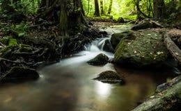 小河在森林里 免版税库存照片