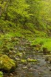 小河在森林 库存图片