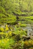 小河在森林 免版税库存照片