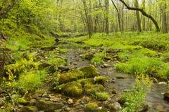小河在森林 图库摄影