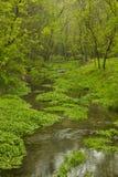 小河在森林 免版税图库摄影