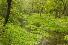 小河在森林 免版税库存图片