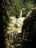 小河在沙漠 库存照片