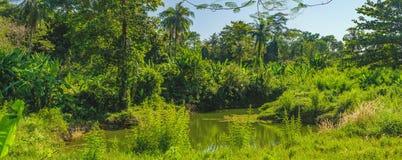小河在泰国的明亮的热带 库存图片