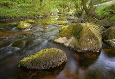 小河在爱尔兰,水流量柔和在绿色,肥沃环境里 免版税库存图片