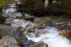 小河在班夫国家公园 库存照片