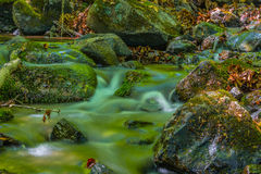 小河在用青苔和石头里盖的森林 图库摄影
