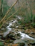小河在白色山国家森林里,新罕布什尔 免版税库存照片