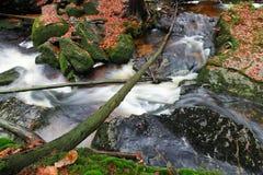 小河在秋天森林里 库存图片