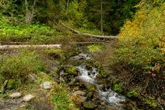 小河在秋天流经犹他山 免版税库存照片