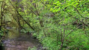 小河在红木国家公园 股票录像