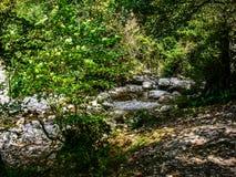 小河在绿色森林里 免版税库存照片