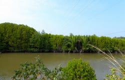 小河在美洲红树森林里 免版税库存图片