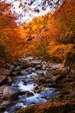小河在金黄秋天森林里 免版税图库摄影