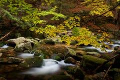小河在10月山森林里 图库摄影