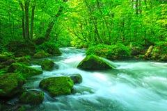 小河在绿色森林里 图库摄影