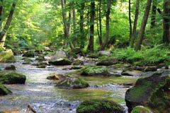 小河在绿色森林里 库存照片