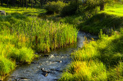 小河在Custer国家公园 免版税图库摄影