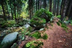 小河在Karkonosze山森林里 免版税库存图片