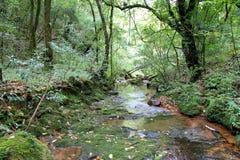 小河在Mawphlang神圣的森林里 免版税库存图片