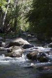 小河在Sedona亚利桑那 图库摄影
