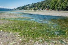 小河处于低潮中3 图库摄影