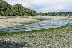 小河处于低潮中2 库存照片