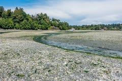 小河处于低潮中 库存图片