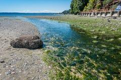 小河处于低潮中4 免版税库存图片