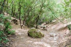 小河干床在树之间的在国家公园 库存照片