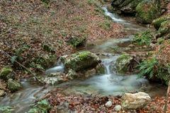 小河是在叶子中 免版税库存照片