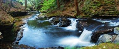 小河森林全景 库存图片