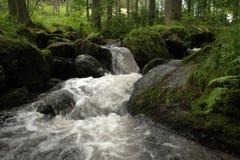 小河森林 小狂放的河 图库摄影