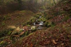小河森林 库存照片