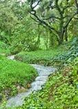 小河橡木 库存图片