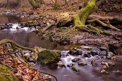 小河流动 库存图片