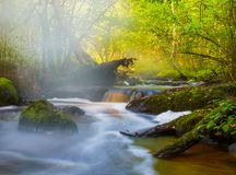 小河流程在森林里 库存照片