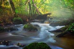 小河流程在森林里 免版税库存图片