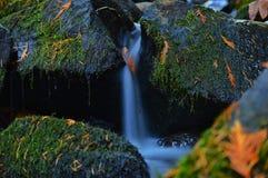 小河流 免版税图库摄影