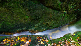 小河温和雨林 免版税库存照片